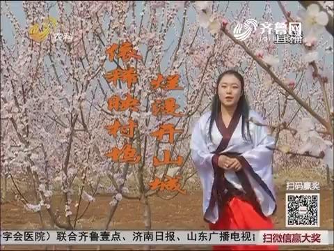 邹城:杏花园里迎春来