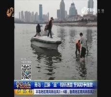 """青岛:江豚""""逛""""栈桥迷路 警民联手施救"""