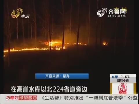 昌乐:紧急 省道旁边树林着了火