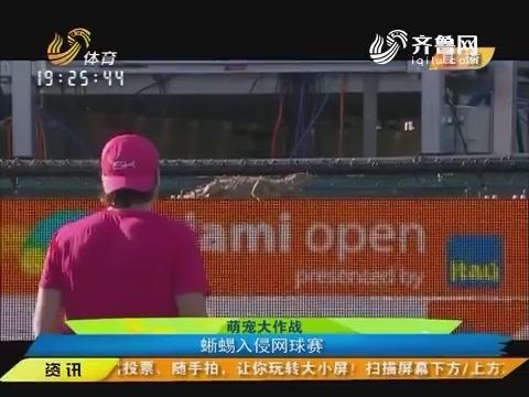 【闪电速递】萌宠大作战:蜥蜴入侵网球赛
