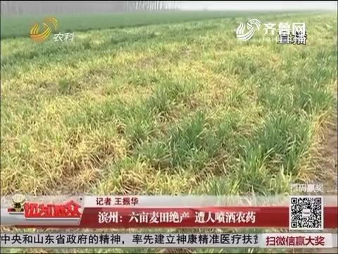 滨州:六亩麦田绝产 遭人喷洒农药