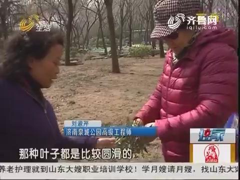 济南:可惜!公园植被被当野菜挖走