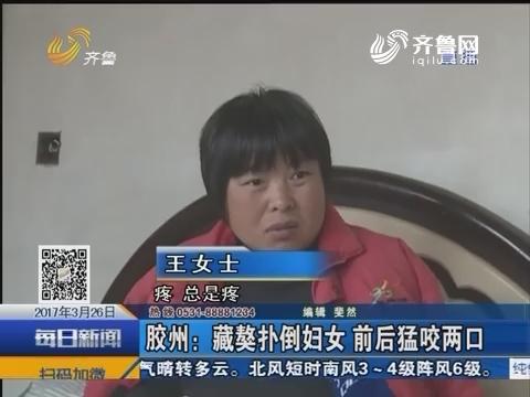 胶州:藏獒扑倒妇女 前后猛咬两口