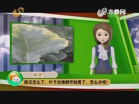 庄稼医院远程会诊:甜瓜怎么了,叶子边缘都开始黄了,怎么办呢?