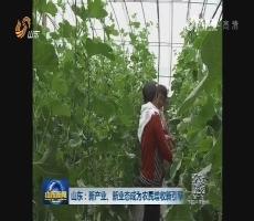 山东:新产业、新业态成为农民增收新引擎