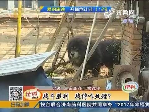 济阳:藏獒进村 战斗悄然打响