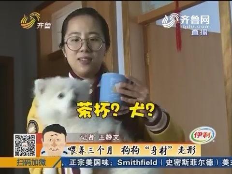 """莱芜:买到一只茶杯犬 喂养三个月狗狗""""身材""""走形"""