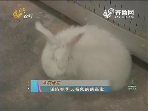 20170405《农科直播间》:谨防春季长毛兔疾病高发