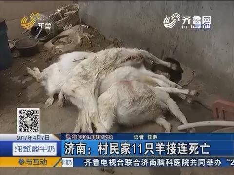 济南:村民家11只羊接连死亡