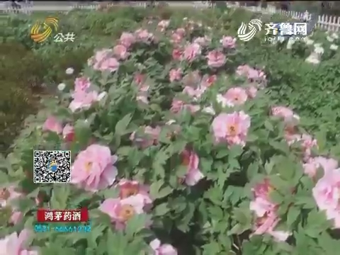 第26届菏泽牡丹文化旅游节开幕