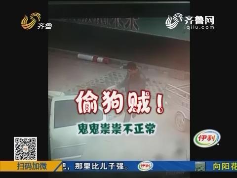 东营:光天化日 贵宾犬遭贼手