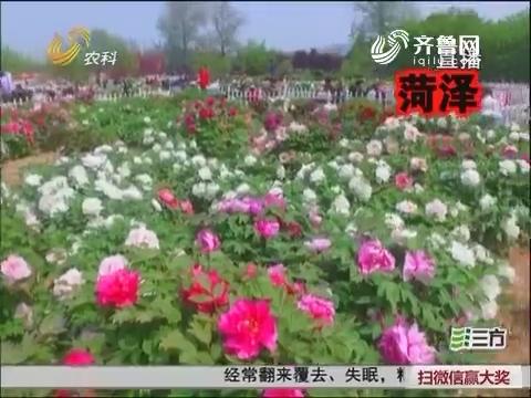 山东:待到山花烂漫时 带着家人去赏花