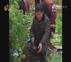 良心农人陈明利(一):与蔬菜对话