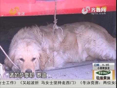 """潍坊:小区现""""大盗"""" 专门对狗下手"""