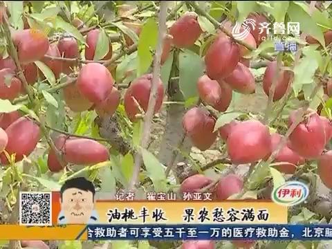 聊城:油桃丰收 果农愁容满面