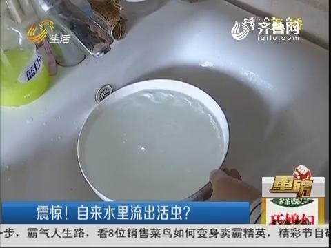 【重磅】临沂:震惊!自来水里流出活虫?