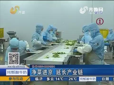 """探索中国""""蔬菜第一县""""——山东莘县(2)"""