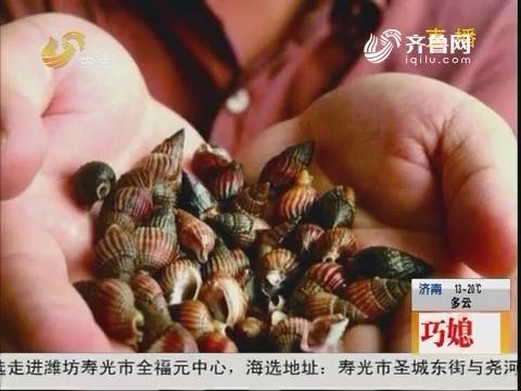 烟台:剧毒织纹螺 误食可能会致命