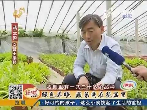 莘县:绿色养眼 蔬菜栽在花盆里