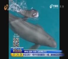 泉城海洋极地世界小江豚出生