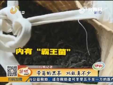 宁阳:带菌的黑茶 功效真不少
