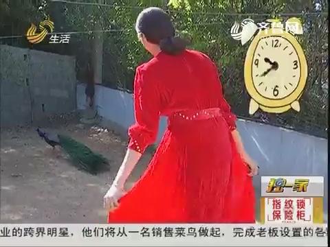 【独一家】烟台:穿艳色衣服 会让孔雀开屏?