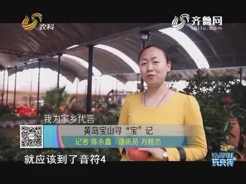 """我为家乡代言 黄岛宝山寻""""宝""""记"""