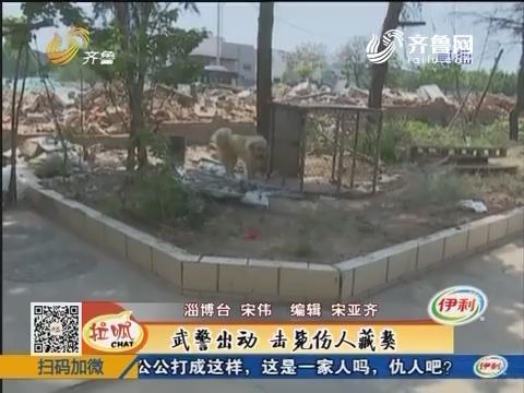 临淄:发狂藏獒咬伤自家主人 武警出动击毙伤人藏獒