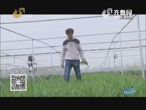 """韭菜地上演""""海陆空""""大战"""