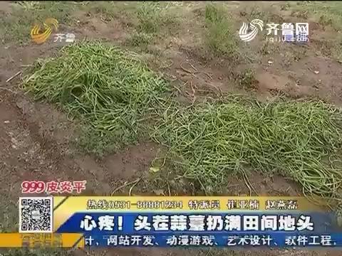聊城:头疼!头茬蒜薹扔满田间地头
