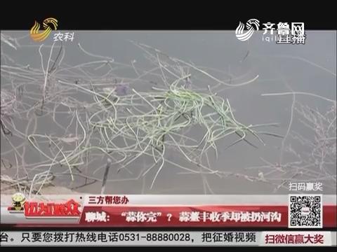 """【三方帮您办】聊城:""""蒜你完""""?蒜薹丰收季却被扔河沟"""