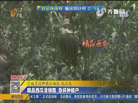 聊城:精品西瓜没销路 急坏种植户