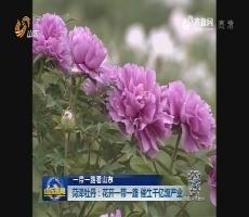 【一带一路看山东】菏泽牡丹:花开一带一路  催生千亿级产业