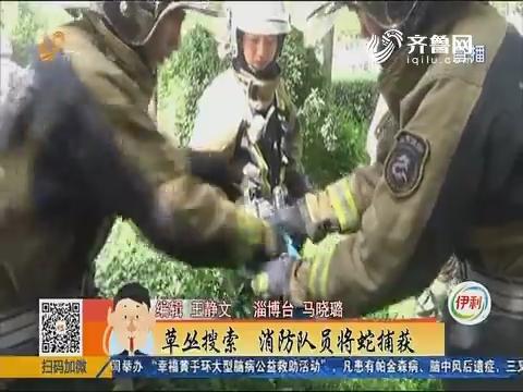 淄博:草丛搜索 消防队员将蛇捕获