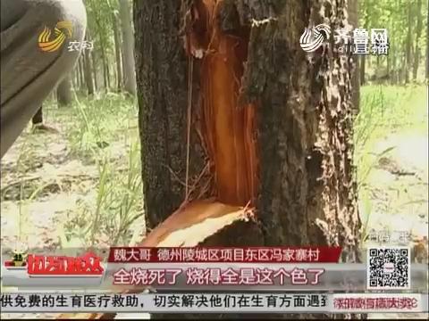 【和气生财】德州:清明点炮烧死550棵树 四名树主讨损失