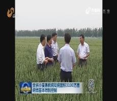 全省小麦条锈病防治面积达4816万亩次 病情基本得到控制