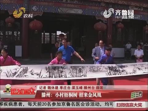 滕州:小村梧桐树 招来金凤凰