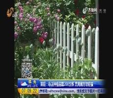 莱阳:非法种植罂粟200余株 民间偏方勿轻信