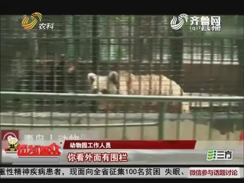 【今日微话题】青岛:游客喂棕熊手指被咬掉 动物园表示很无辜