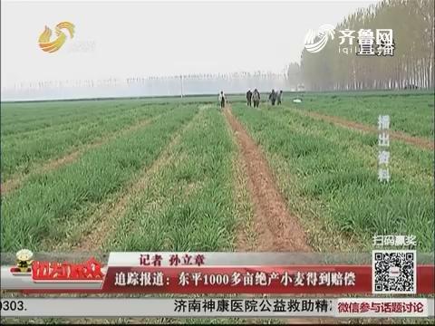 追踪报道:东平1000多亩绝产小麦得到赔偿
