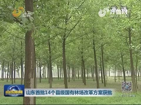 山东首批14个县级国有林场改革方案获批