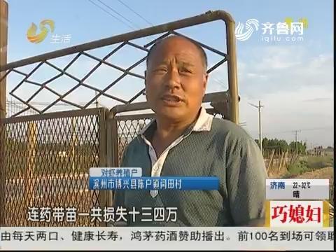 滨州:30亩虾塘全死 问题出在哪?