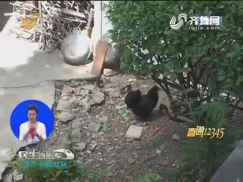 """【直通12345】公共绿地变身""""菜地"""" """"养鸡笼"""""""