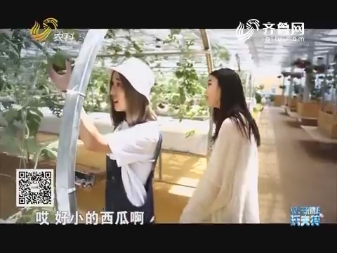 【网红在行动】走进莘县中原现代农业嘉年华