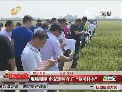 """【群众新闻】淄博:现场观摩 小麦选种有了""""参考样本"""""""