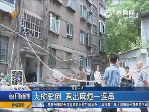 济南:大树歪倒 惹出麻烦一连串