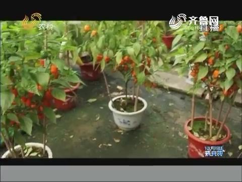 """蔬菜盆栽""""四不像"""""""