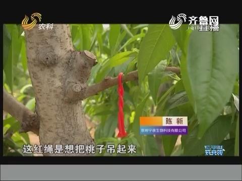老徐带你逛果园:桃园害虫绿色防控