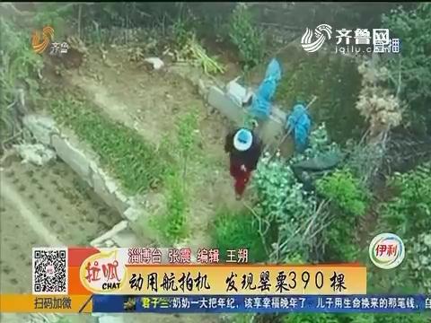 淄博:动用航拍机 发现罂粟390棵