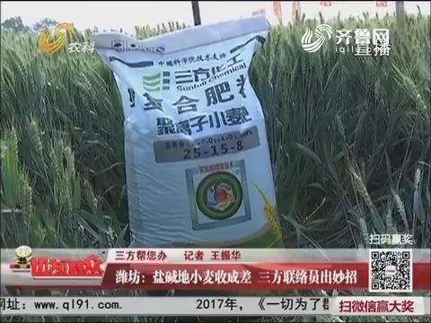 【三方帮您办】潍坊:盐碱地小麦收成差 三方联络员出妙招